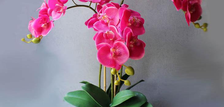 Как спасти орхидею?