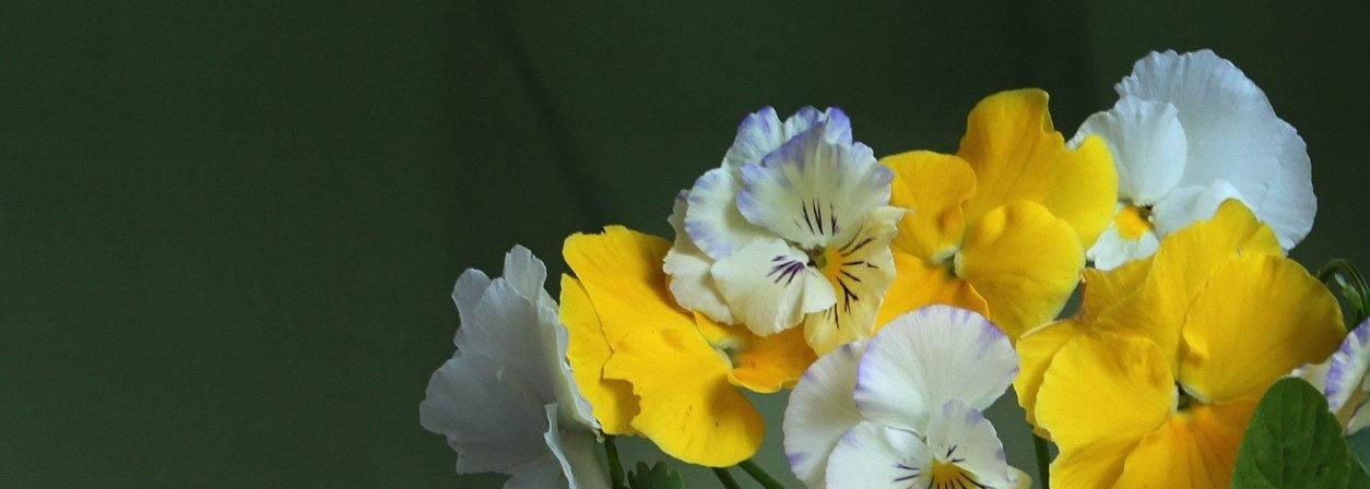 Декоплант: клуб любителей декоративных растений