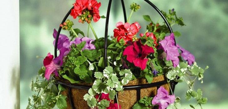 Растения подходящие для подвесной корзинки