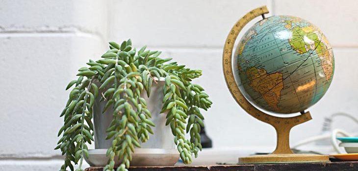 12 способов убить ваши комнатные растения